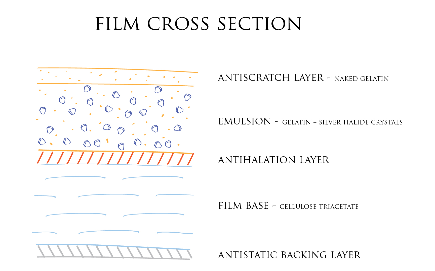 Illustration photographic film cross section