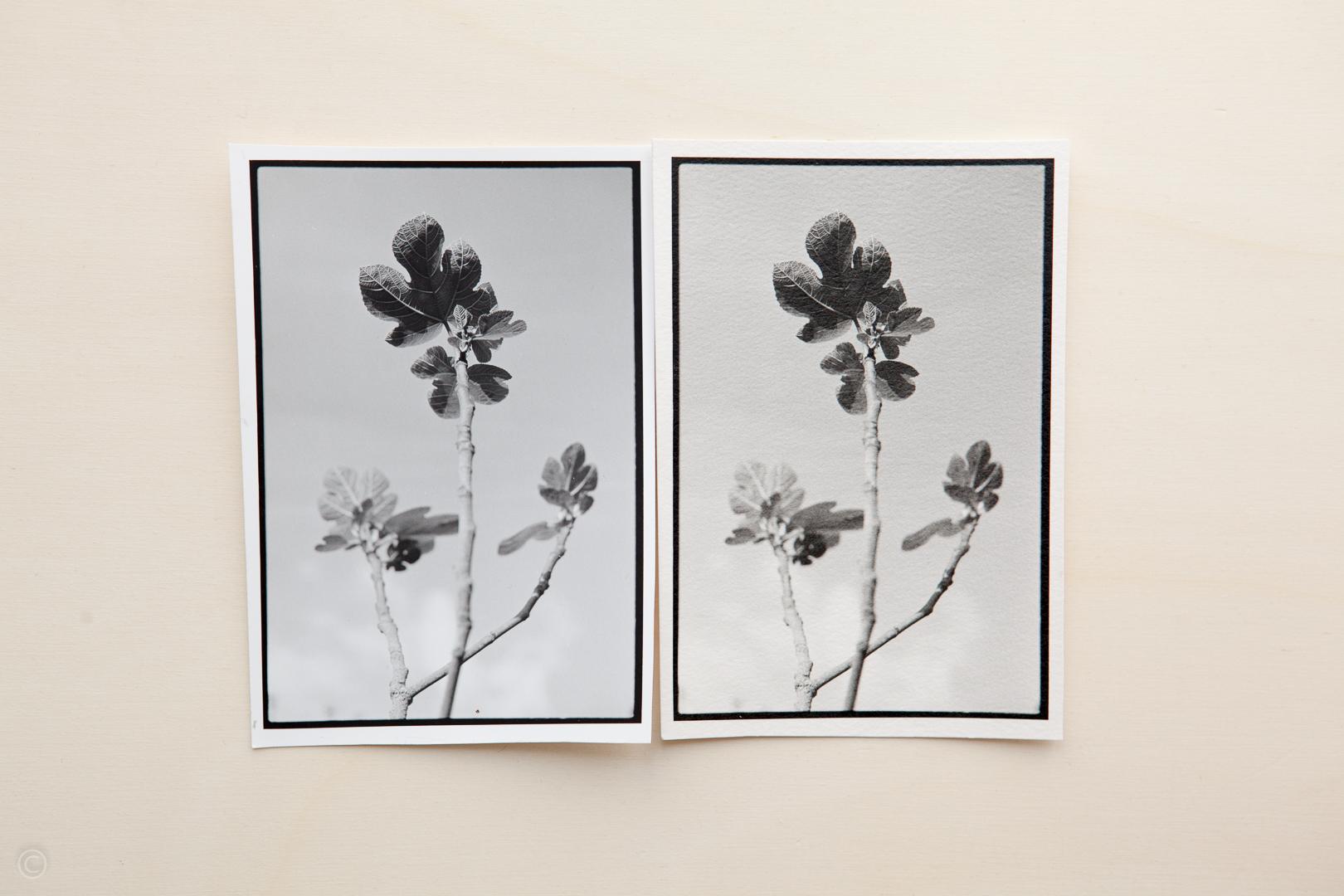 Silver gelatin photo paper comparison Fomabrom Matt vs Ilford Art 300 003