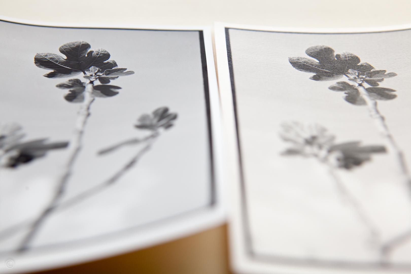 Silver gelatin photo paper comparison Fomabrom Matt vs Ilford Art 300 006