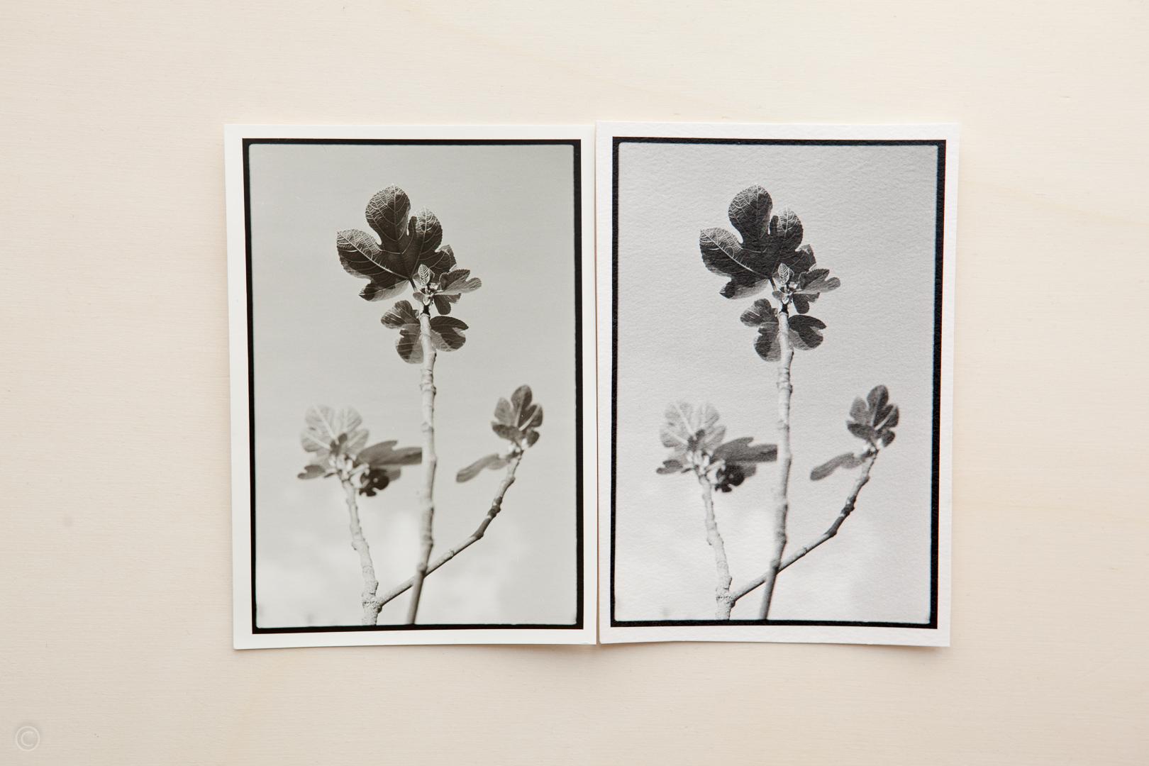 Silver gelatin photo paper comparison Fomatone MG Classic vs Ilford Art 300 005